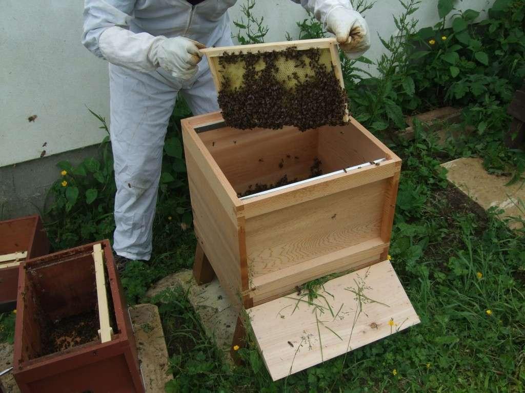 Hiving a swarm 2