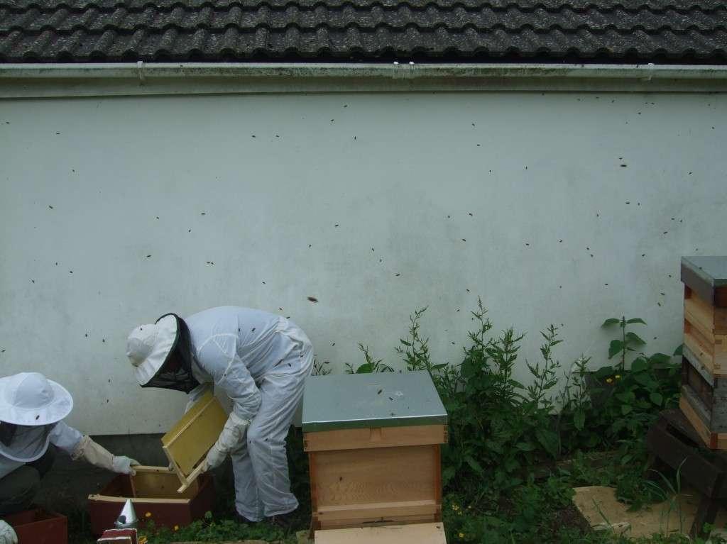 Hiving a swarm 3