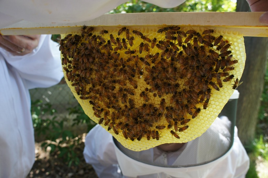 top bar hive 5