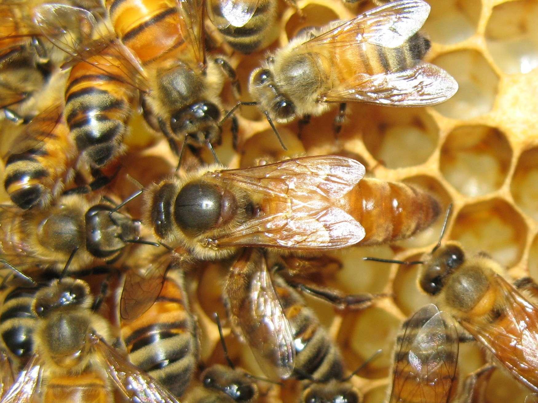 queen bee - photo #4