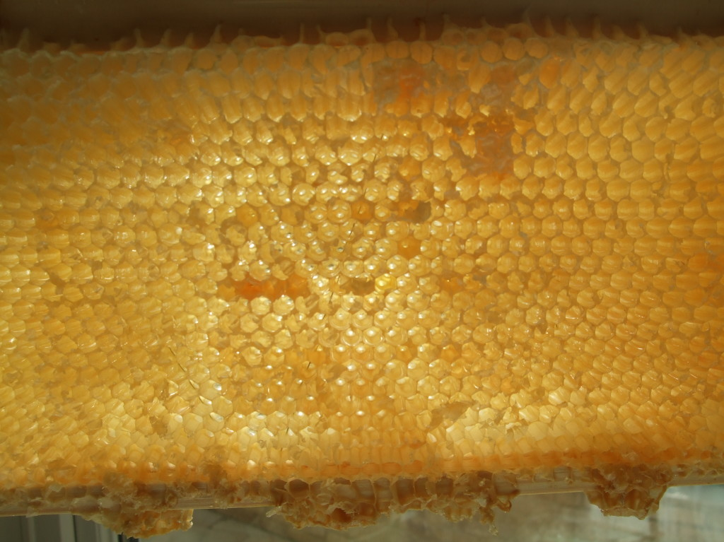 Empty Honey Frame After Extraction