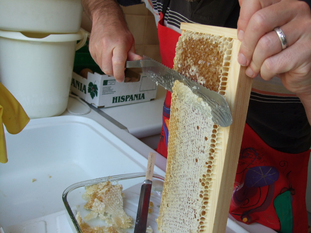 Cutting Caps Off Frame Of Honey