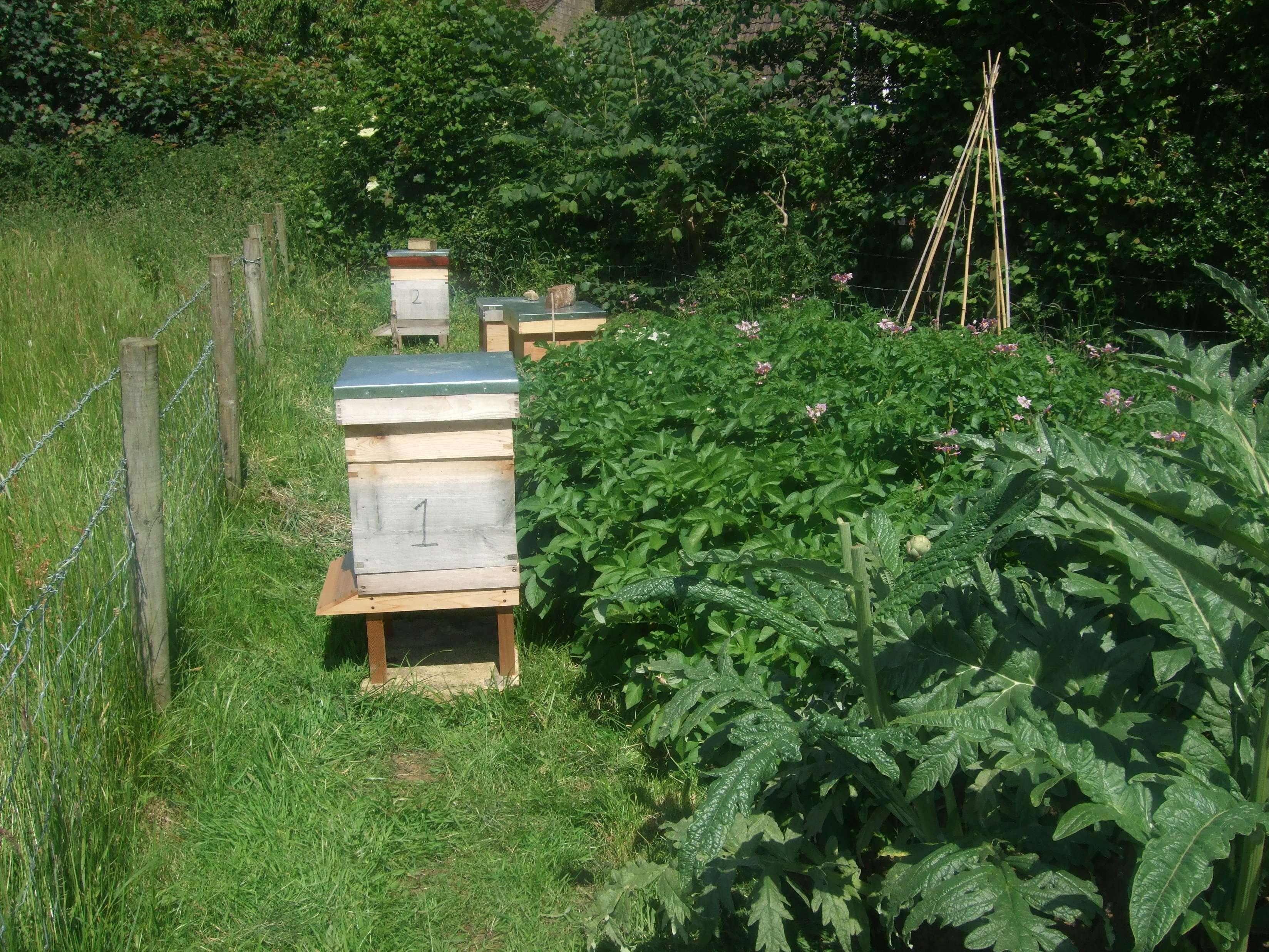 Beehive, Potatoes, Globe Artichoke